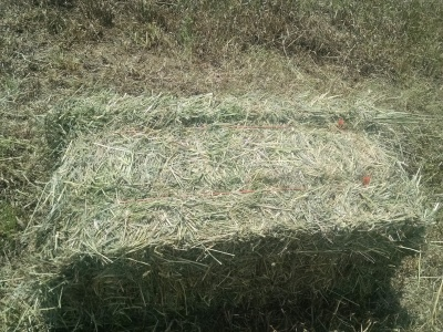 The Business of Hay